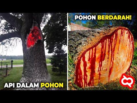 Orang² Dibuat Kaget Dengan Fenomena Aneh Pada Pohon Ini! Setelah Ditelusuri Ternyata..