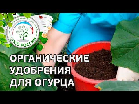 Подкормка огурцов органическими удобрениями.