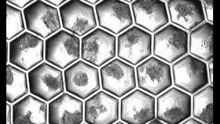 Stem Cell Culturing - Shrink Nanotechnologies