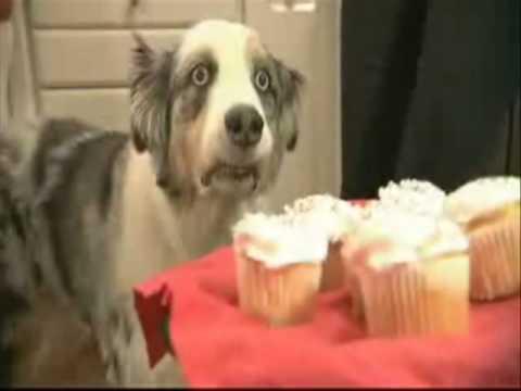 Dramatic Cupcake Dog