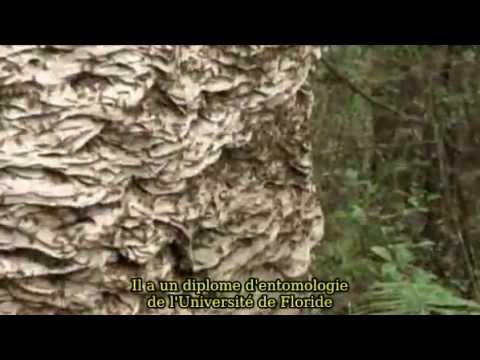 comment localiser un nid de frelon