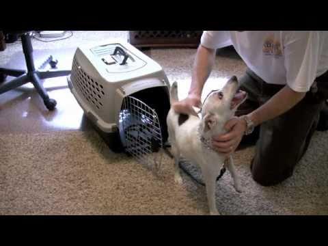 Small Dog – Kennel Training
