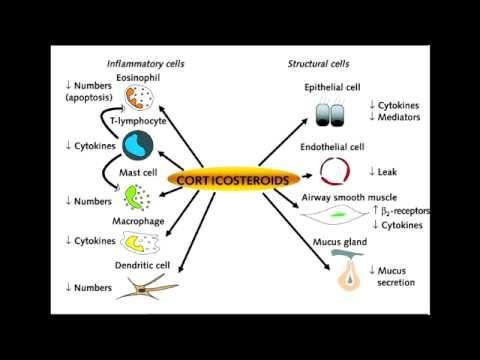 Asthma Drugs - Corticosteroids (Beclomethasone & Fluticasone)