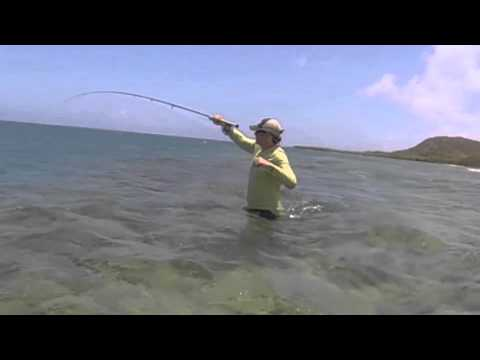 """""""How to catch Permit – island style!"""" Caribbean Saltwater Fly Fishing in Antigua"""