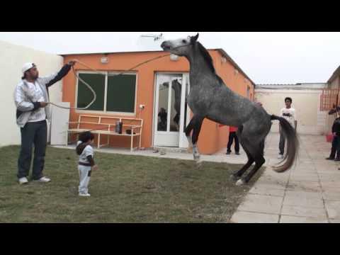 سيف مالك الهزاع حفظه الله - الخيل العربي27-1-2011