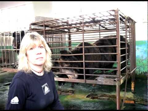 Moon Bear Rescue - Shandong<br>Province, China  2010 Part 1