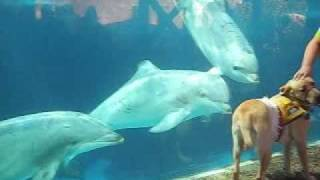 A Dog And Dolphins Meet For The First Time!