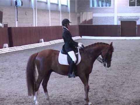 Областные соревнования по конному спорту Ярославль 2013 год