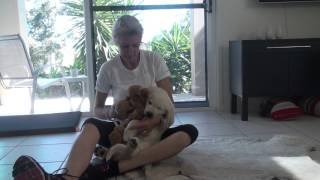 Top Tips: Taking Care Of Your New Puppy (DECO2210:Elise Todd,s4288003(3))
