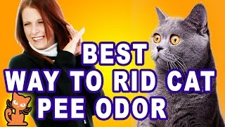 How To Remove Pet Odor