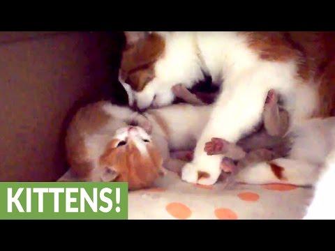 Mama Kitty Cuddles Her Adorable Newborn Kittens