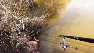Video Fishing with Blowguns! MP3, 3GP, MP4, WEBM, AVI, FLV Mei 2019
