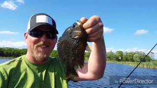 May 29th, 2017. Jeremy and Andy put a beating on big gills. Extremely windy prespawn action