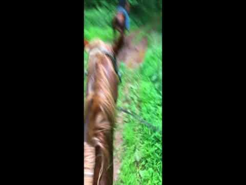HORSEBACK RIDING PA