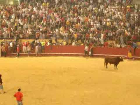 Bull gores a guy in Bullring - Nearly kills him - Navalcarnero