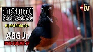 Video Murai ABG Jr 007 Bongkar Lagu Dahsyat, Tips ala Om Parwoto Red Sugar SF PWT MP3, 3GP, MP4, WEBM, AVI, FLV Oktober 2018