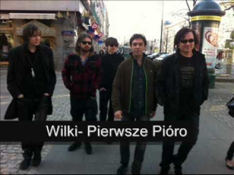 Tekst piosenki Wilki - Pierwsze pióro po polsku