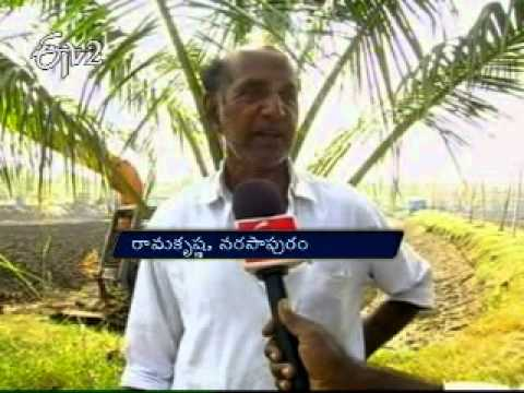 Agri fields turning into illegal prawn farms in West Godavari district