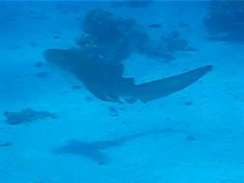 Submarinismo en Hurghada (Egipto)
