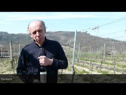 Luigi Boveri Boccanera Barbera Piemonte Vinitaly 2018