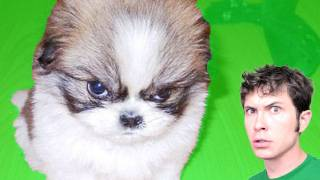 PUPPY ANGRY!!