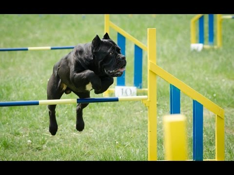 Agility Competition Bulgaria 2015