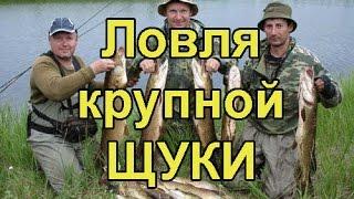 рыбалка красноярский край на окуня и щуку