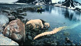 Imax                 3d   Imax  To The Arctic 3d  2012                                             Hd  1080p