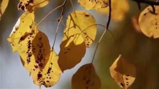 Осенний романс - Киреев Владимир