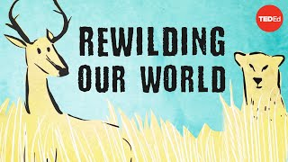 From the top of the food chain down: Rewilding our world (TED-Ed)
