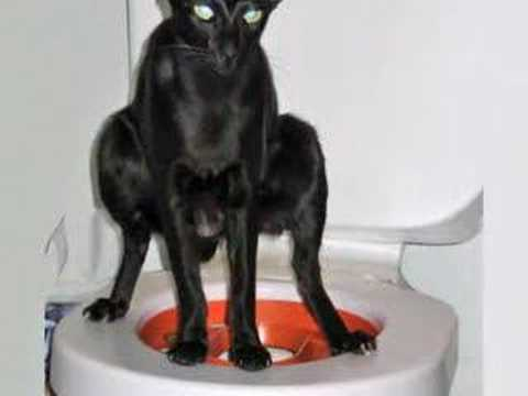 Litter Kwitter Cat / Kitten toilet training system amazing