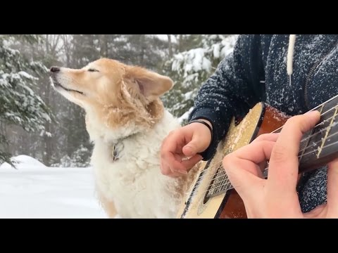 Musician Performs a Magical Snowy Cover of Mia  Sebastian s Theme from La La Land With His Loyal Dog at His