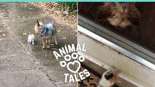 W czasie ulewy pies dostrzegł na ulicy przemoczonego kotka. Jego reakcja zwaliła właścicielkę z nóg!