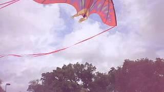 Ocean Springs (MS) United States  city photos gallery : Flying kites on the beach in Ocean Springs MS