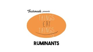 Ruminants Eat Things 360º VR Experience | Tastemade Hors d'oeuVRes by Tastemade