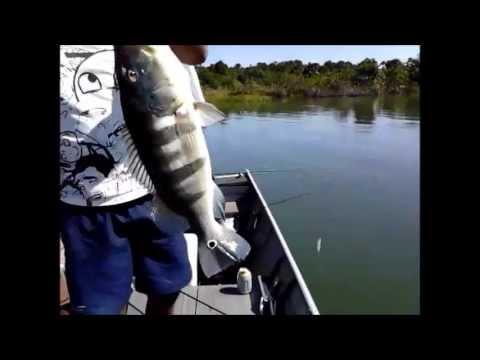 Pescaria de tucunaré em Três Lagoas - MS - Rio Sucuriú