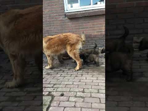 Bekijk Video