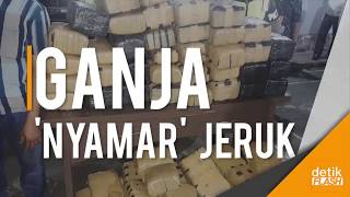 Video Gila, Di Jakarta 1/4 Ton Ganja 'Nyamar' Jadi Jeruk!! MP3, 3GP, MP4, WEBM, AVI, FLV Juni 2018