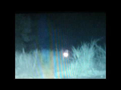 REAL ALIEN SIGHTING! Spooky Original Video/sighting
