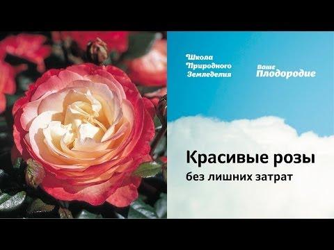 Бикини три алых розы tekst