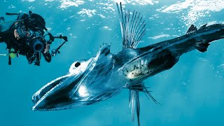 11 Weirdest Creatures Found In Antarctica by Epic Wildlife