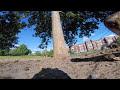 Enlace a Cuando una ardilla agarra tu GoPro y se pone a grabar desde su perspectiva