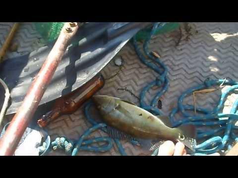 pesca de tucunaré no tiete em sabino sp