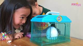 Video Unboxing Little Live Pets Chick | Egg Surprise | Zara Review Mainan Anak | Lets Play MP3, 3GP, MP4, WEBM, AVI, FLV Mei 2018