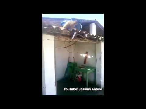 Un mono borracho y con un cuchillo hace cundir el pánico en un pequeño pueblo