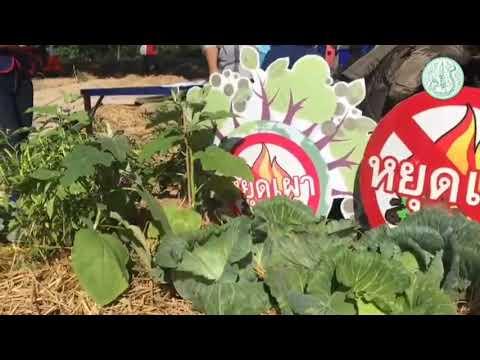 แนวทางการป้องกันและแก้ไขปัญหาหมอกควันในพื้นที่เกษตร จังหวัดลำปาง