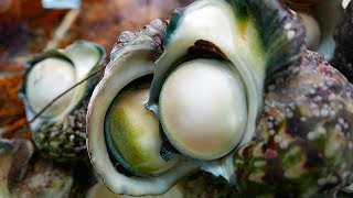 GIANT SEA SNAIL, or yakogai, is a specialty in Okinawan cuisine. Watch them being prepared into sashimi and sautéed in a...