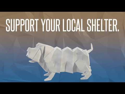 Video: WCJC Animal Shelter, August 17