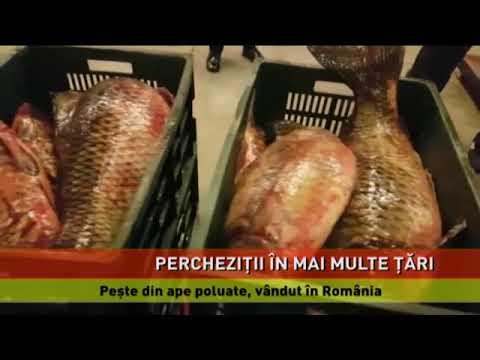 Rețea internațională care se ocupa cu activități ilegale în pescuit, destructurată