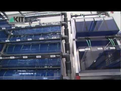 European Zebrafish Resource Center (EZRC) at KIT